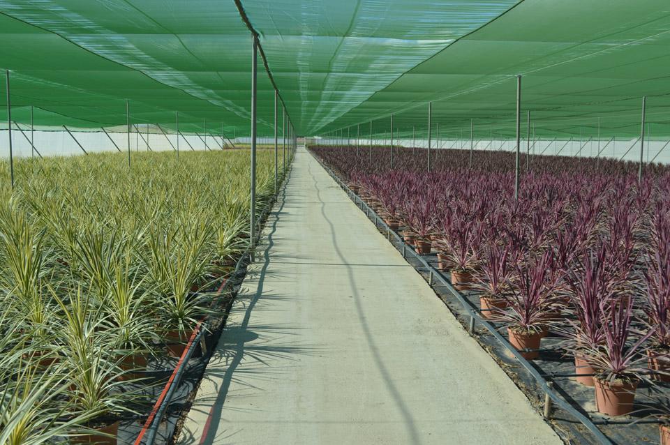 Producción de planta