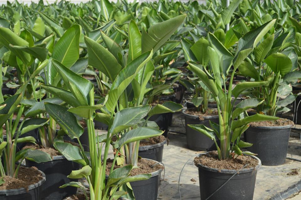 Produccion de planta